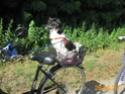 POPPY (ex RONNA) - femelle, de petite taille - née environ mai 2018 - REMEMBER ME LAND - Adoptée par Hélène (01)  - Page 3 2020-081