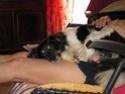 POPPY (ex RONNA) - femelle, de petite taille - née environ mai 2018 - REMEMBER ME LAND - Adoptée par Hélène (01)  - Page 3 2020-084