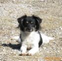 POPPY (ex RONNA) - femelle, de petite taille - née environ mai 2018 - REMEMBER ME LAND - Adoptée par Hélène (01)  - Page 3 2020-086