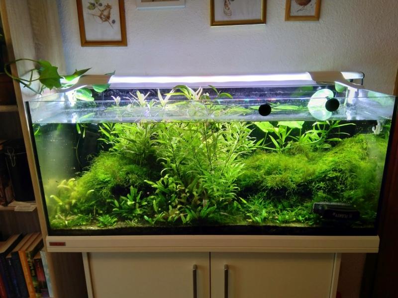 Verwandlung Aquarium in Orchideen-Vitrine Img_2018