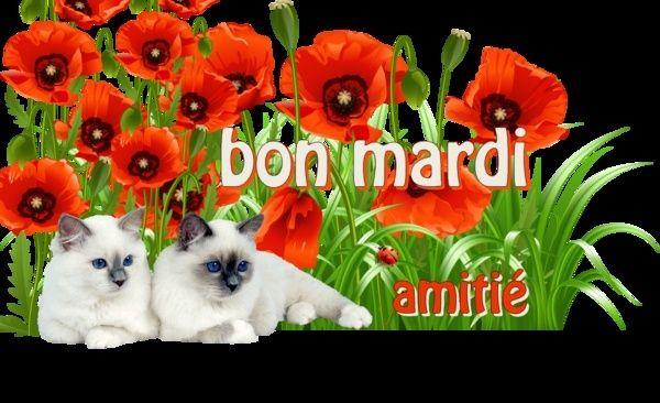 Bonjour - Page 6 2c89d310