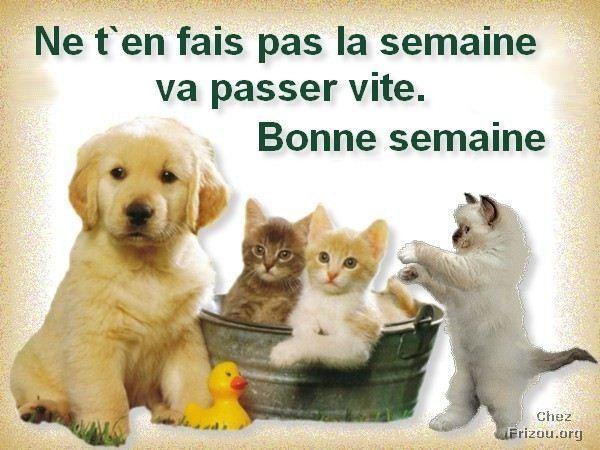 Ici on se dit bonjour  - Page 39 66224910