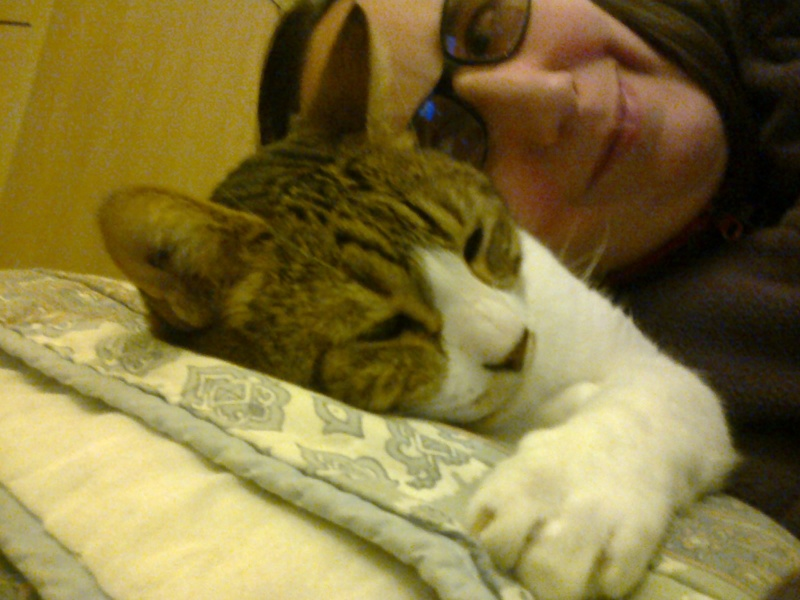 Tigrou et Mysti adopét à l'école de chat libre de Toulouse Photo010