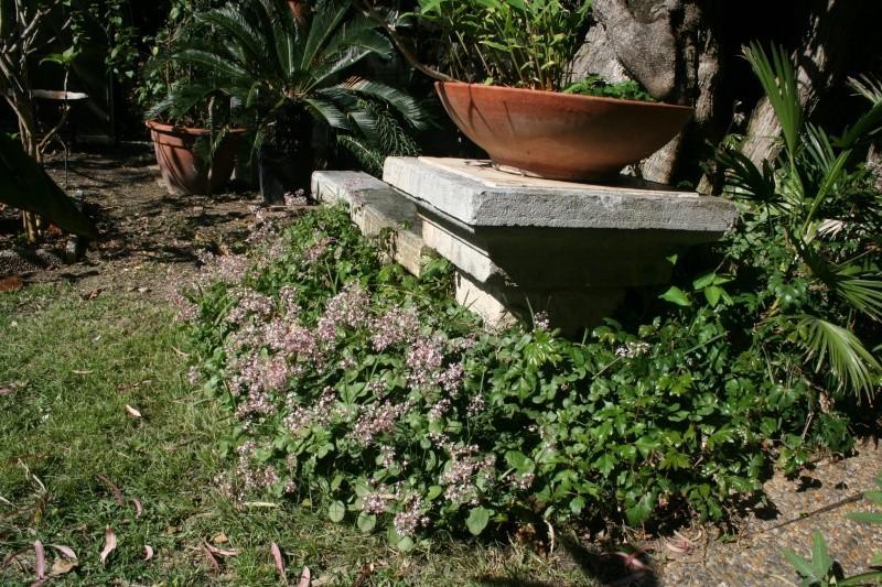 Crassulacées en fleurs Crassu11