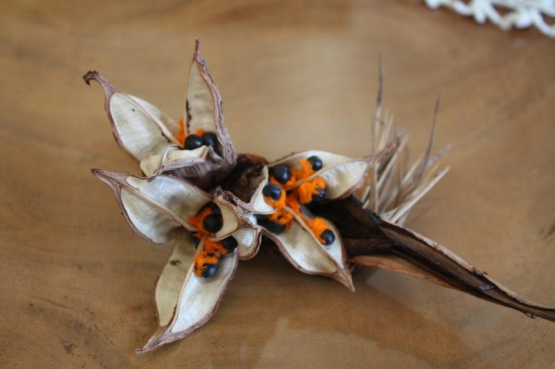 Strelitzia reginae 2016 Streli12