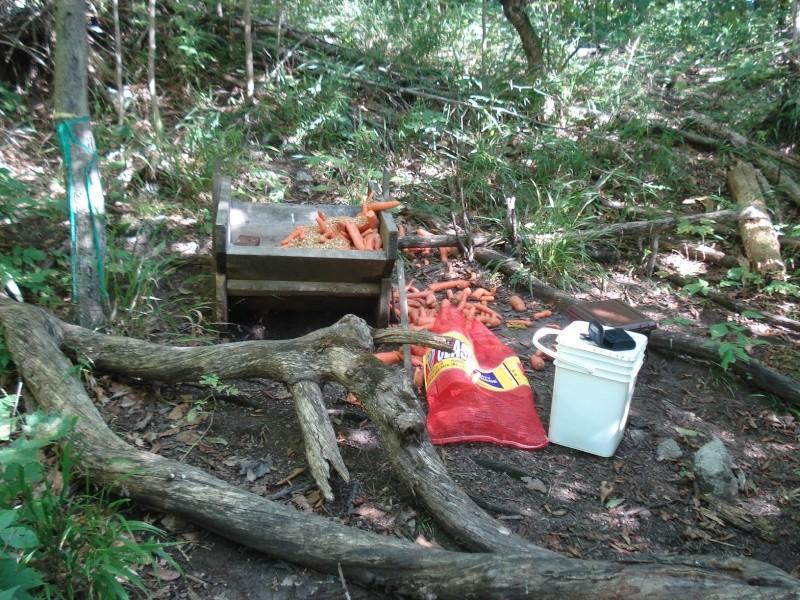 Quelques photos , manque de nourriture... Dsc02628