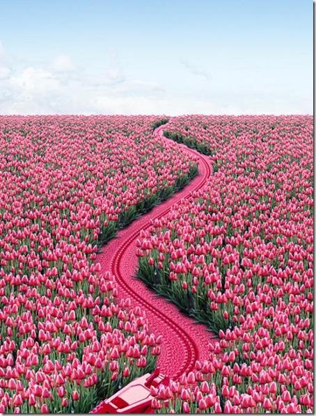 Les tulipes - Page 3 5isdey10