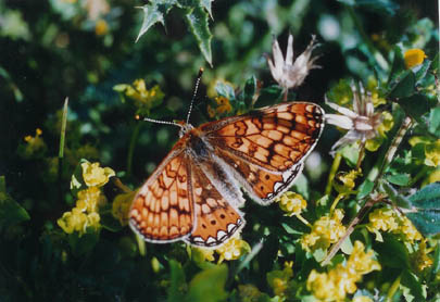 Les papillons. - Page 2 Papil310