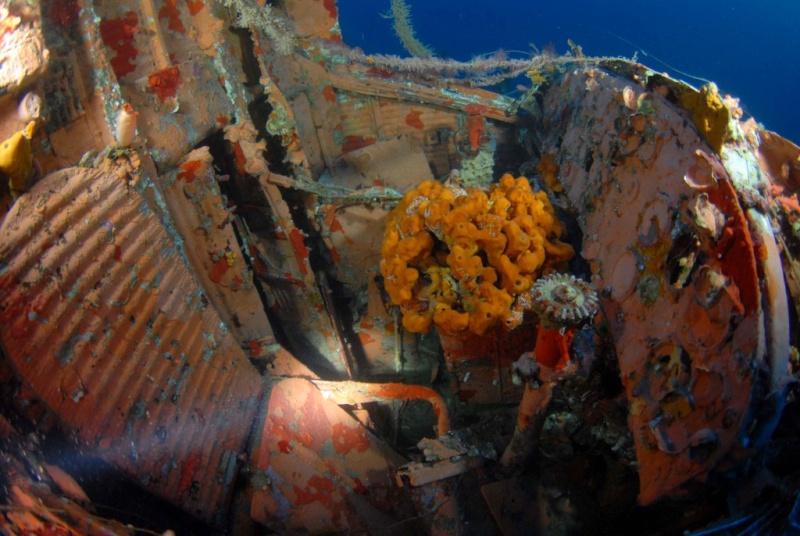 Un JUNKERS52 repose sur un banc de sable pendant 65 ans, à 67 mètres de profondeur 5ju10