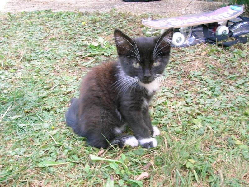 Petite chatonne tigré & blanc, très joueuse, 2 mois (60) (+ 2 soeur adoptées) Dscn0814