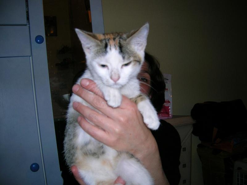 6 chatons récupérés dans la rue par une amie à Chantilly dans le 60 Dscn0923