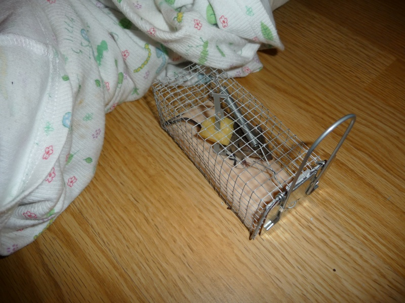 Help, petite souris avec blessure à l'oeil... Aalia_19