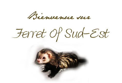 Ferret Of Sud - Est Welk10