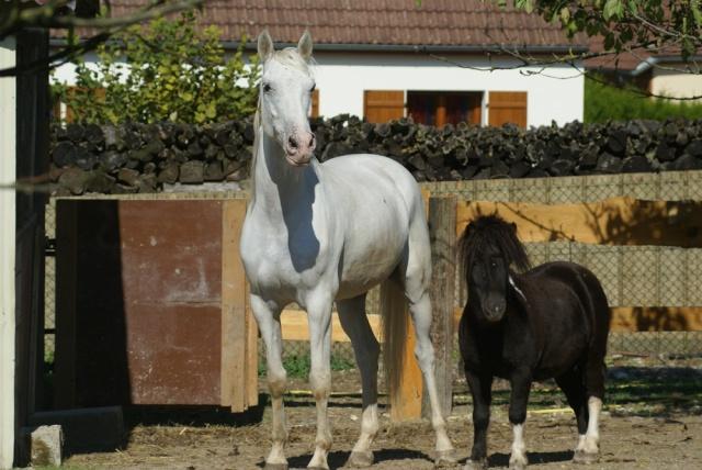 Jalisco, mon 1er cheval... Dsc01710