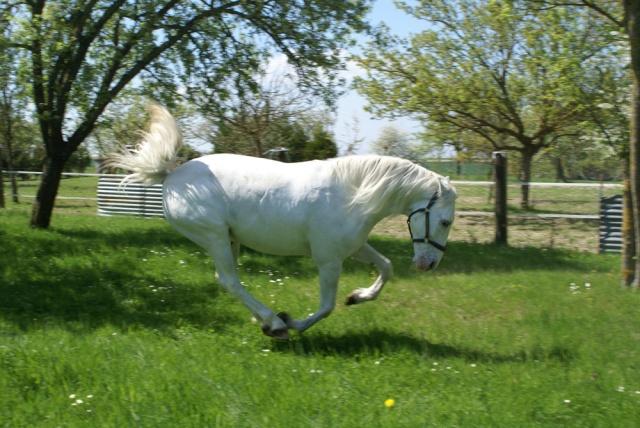 Jalisco, mon 1er cheval... Dsc06410