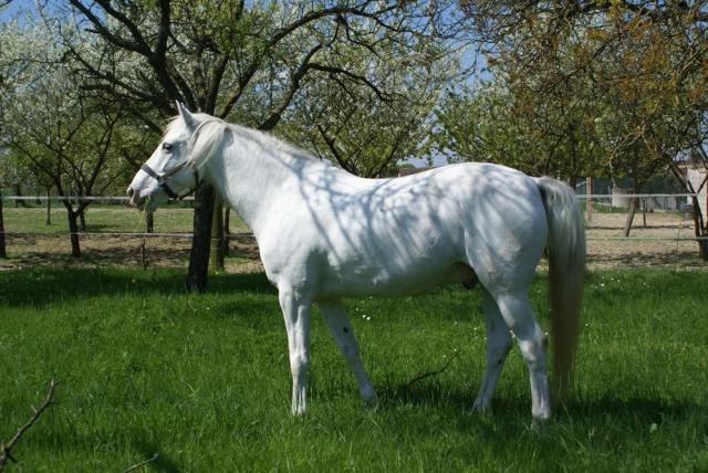 Jalisco, mon 1er cheval... Dsc06411
