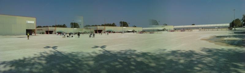 GPF FLYBALL AVIGNON 2009 P0310010
