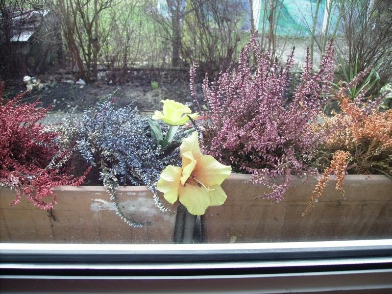 le printemps a fais son entrer! Photo_11
