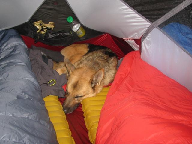 Trek - itinérance avec un chien Img_4710