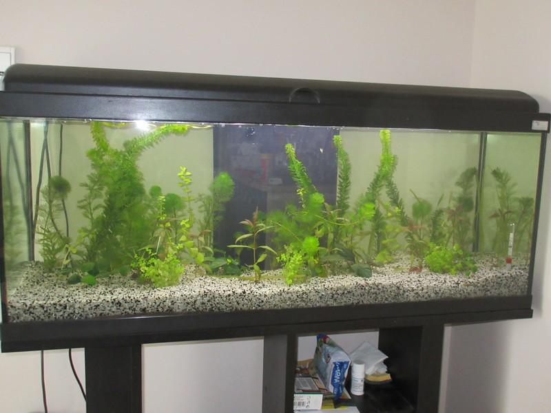 mon premier aquarium : 115L Aqua_110