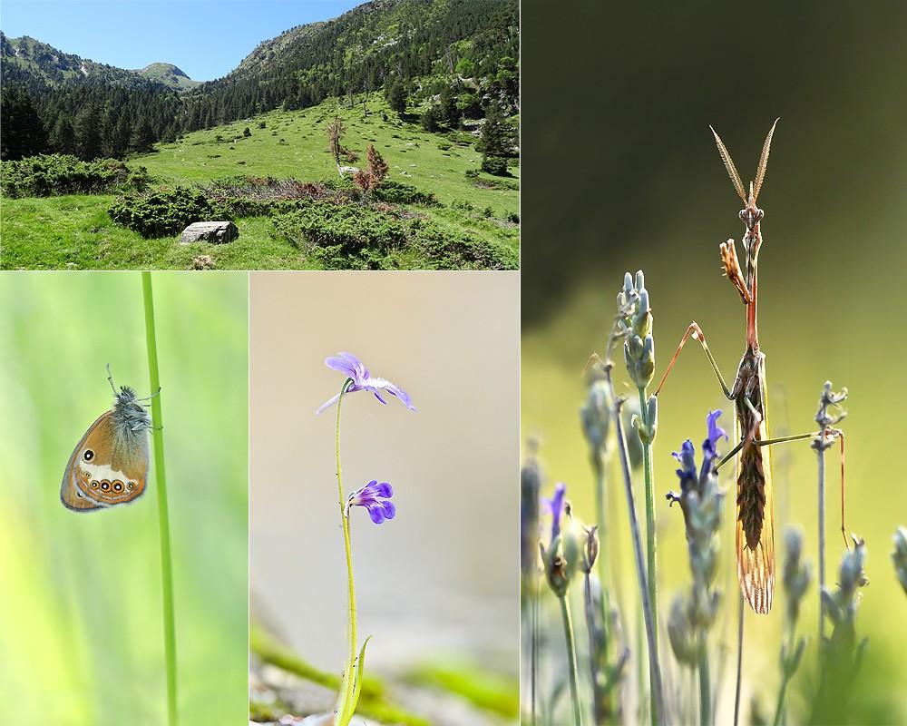 semaine dans les Hautes-Pyrénées - 2015 210