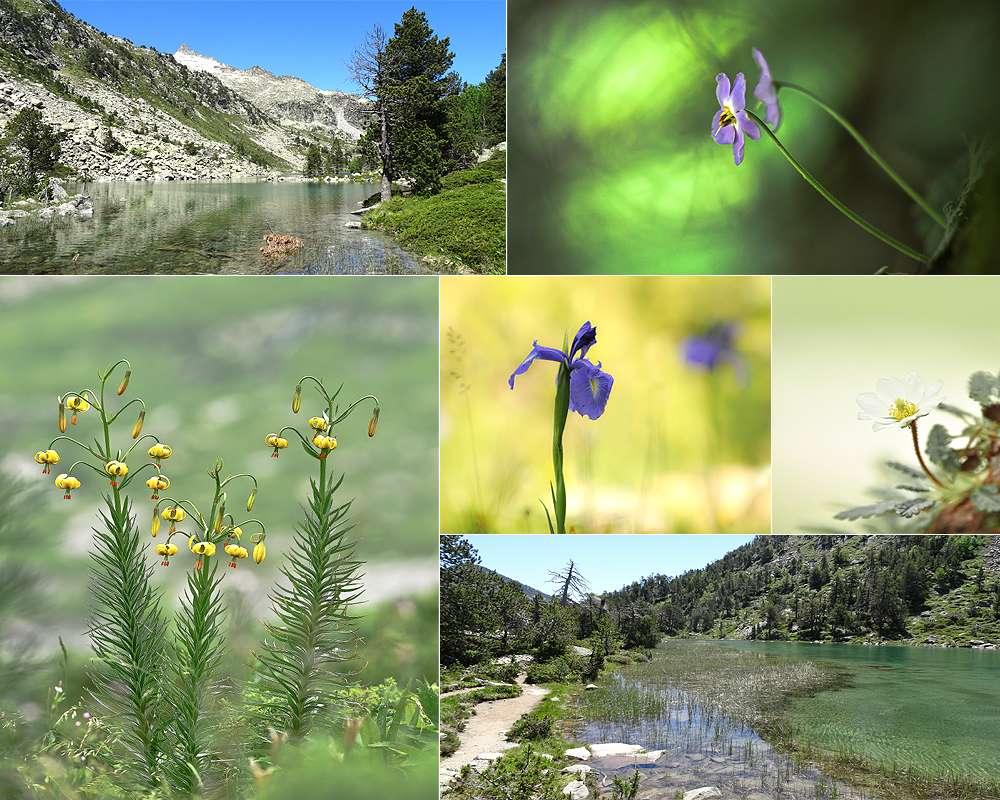 semaine dans les Hautes-Pyrénées - 2015 510