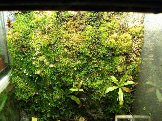 Postez ici vos terrariums serres et tourbieres Dsc04313