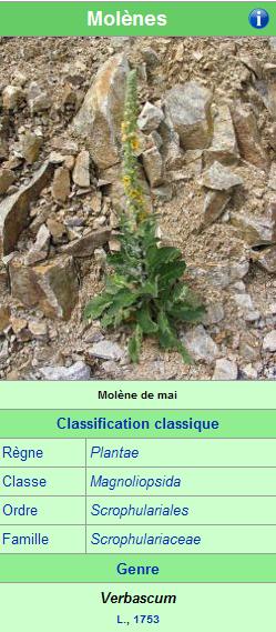 [ Histoire et histoires ] Loulou de MOLENE - Page 3 Molene11