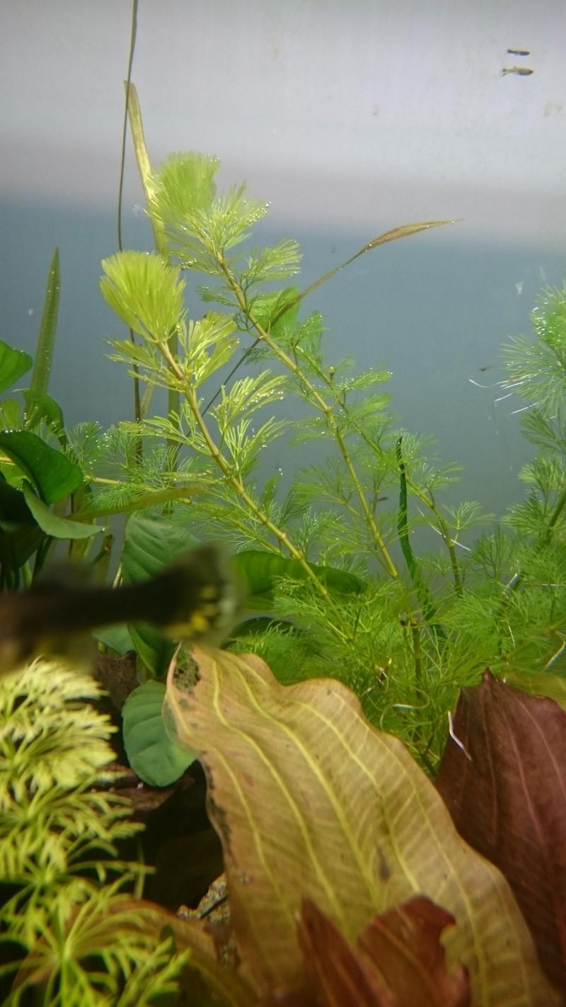 Ma petite jungle Dsc_0113