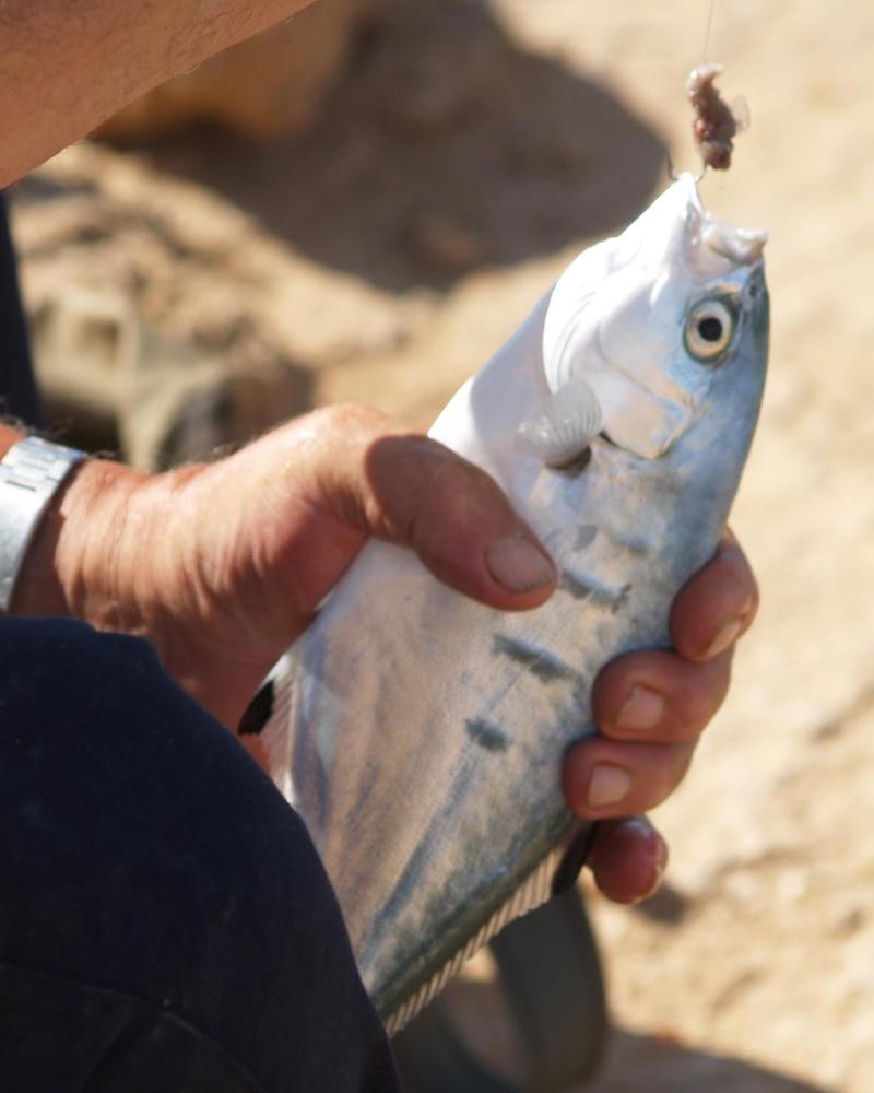 [Maroc/Pêche] Quel est ce poisson ? Pa030810