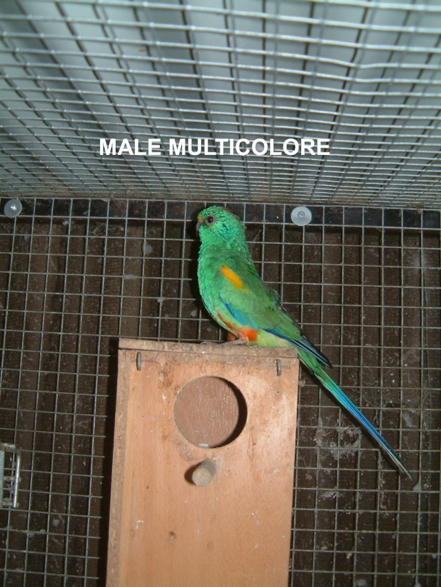 Multicolore Multic13