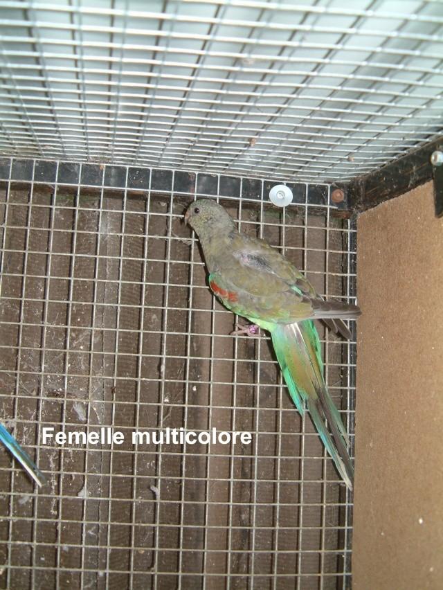 Multicolore Multic15