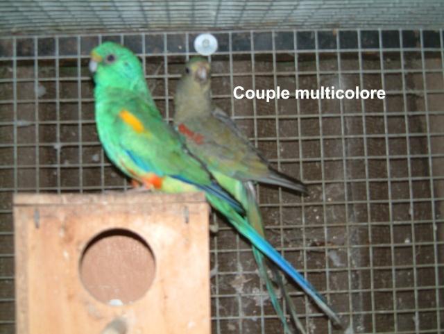 Multicolore Multic16
