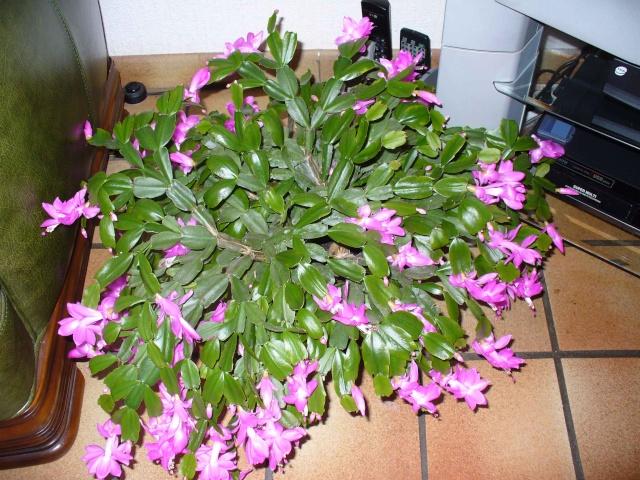 Mes plantes grasses Plante11