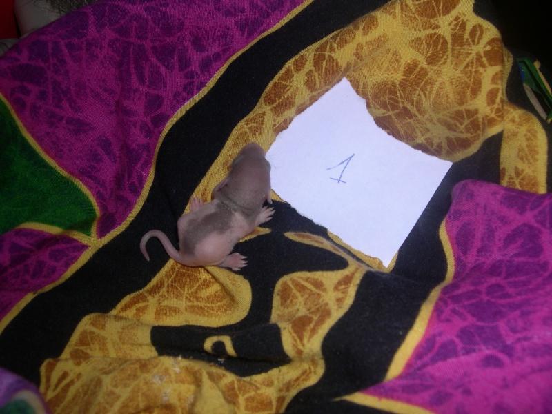 Une ptite mère [nouvelles photos P11] - Page 7 Dscn3318