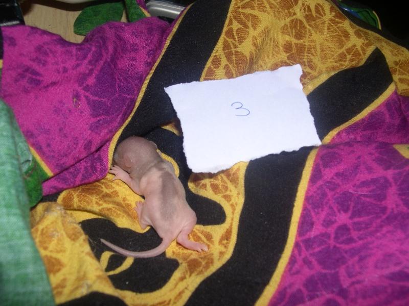 Une ptite mère [nouvelles photos P11] - Page 7 Dscn3322