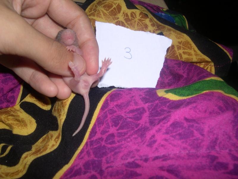 Une ptite mère [nouvelles photos P11] - Page 7 Dscn3324