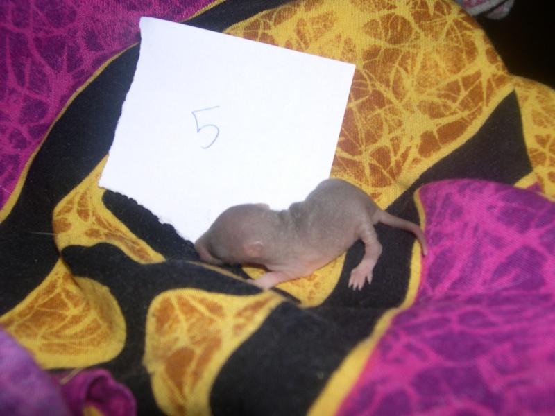 Une ptite mère [nouvelles photos P11] - Page 7 Dscn3327