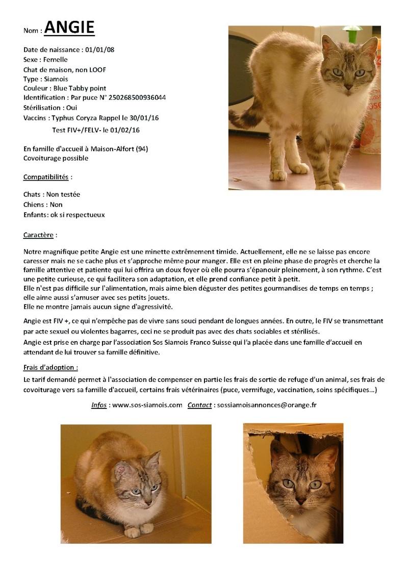 Fiches d'une partie de nos chats adoptables  Fiche-16