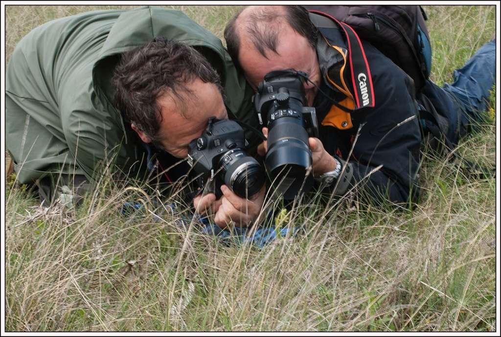 Classer les Ophrys français - Page 3 Hourto10