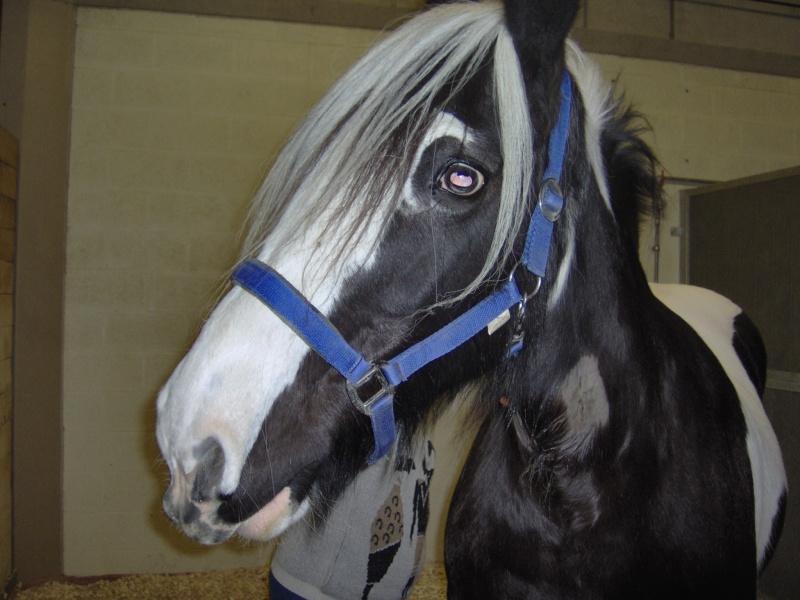 Où est le point G de vos chevaux ? - Page 2 Hpim0219