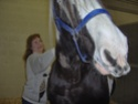 Où est le point G de vos chevaux ? - Page 2 Hpim0218