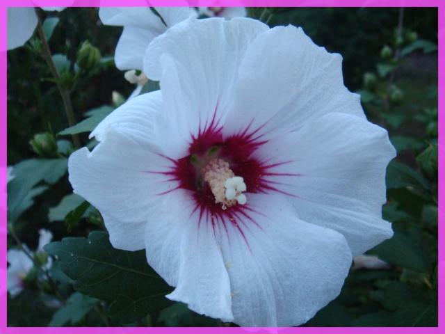 Concours photo du mois d'août - Page 3 Fleur10