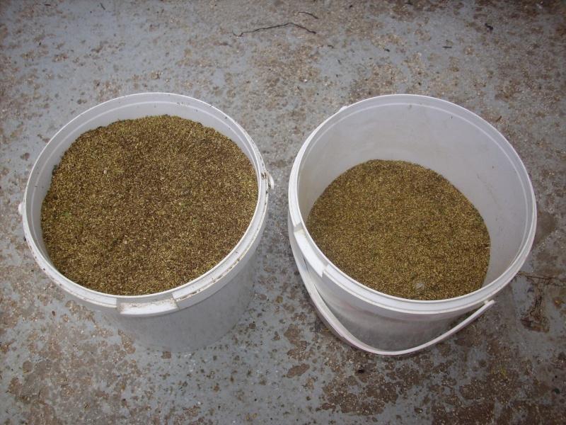 Ma façon de récolter les graines de tanaisie© Img_0100