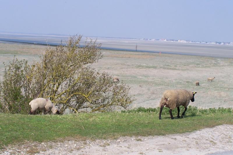 ST Valery sur Somme, Mers les Bains, le Téport  Avril 2009 100_0816
