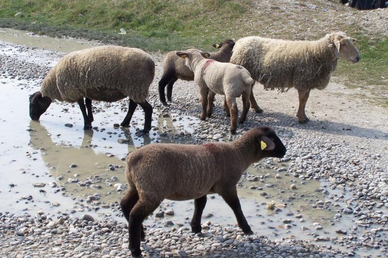 ST Valery sur Somme, Mers les Bains, le Téport  Avril 2009 100_0817