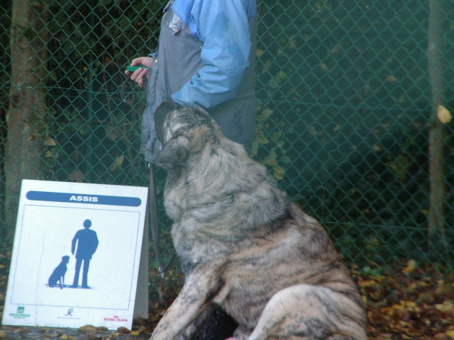 test d'éducation sociale du chien Imgp5918