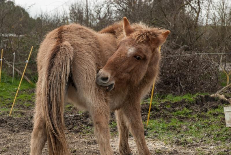 DIABLOTINE - ONC Mule née en 2014 - adoptée en juin 2016 par Amélie Dsc_0027