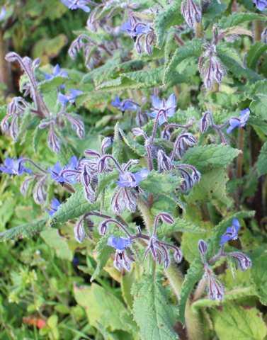 Blue..........bleu !!! 17032010
