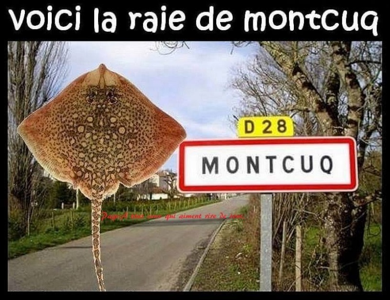 humour - Page 37 10006910